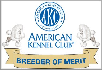 AKC Breeder Of Merit Toy Poodle Breeder
